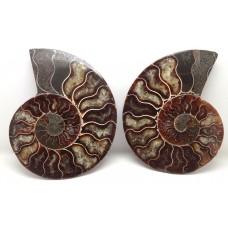 Polished Ammonites cut Pair.