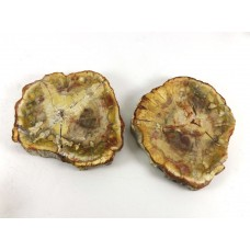 Petrified Wood Pair of Slices with Polished Faces