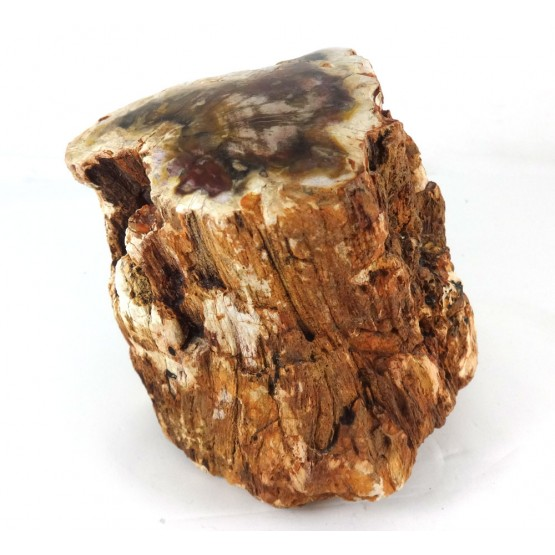 Fossilised Wood Log