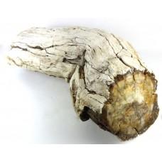 Wood Branch Fossilised