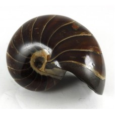 Nautilus all Polished Surface