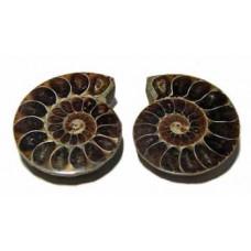 Ammonites cut Pair.