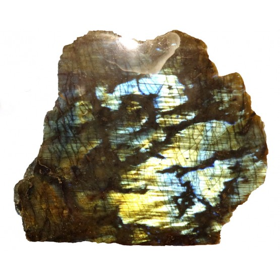 Labradorite 1 Face Polished Blue Gold Colour